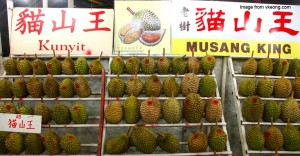 durian-feature-image